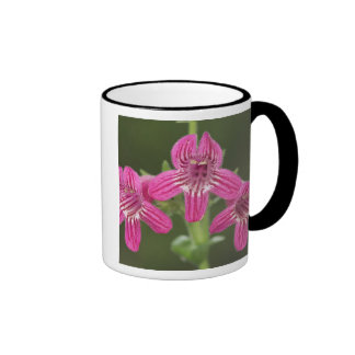 Scarlet Penstemon, Penstemon triflorus, Mug