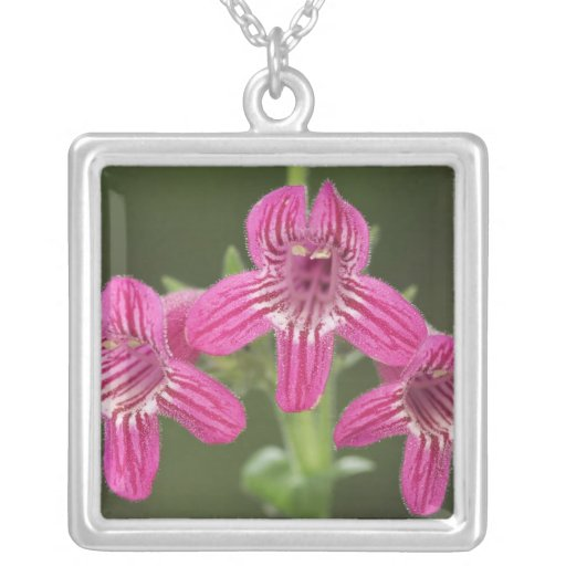 Scarlet Penstemon, Penstemon triflorus, Square Pendant Necklace