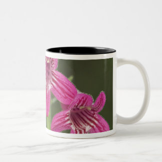 Scarlet Penstemon, Penstemon triflorus, Two-Tone Coffee Mug