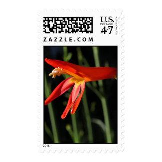 Scarlet Penstemon Postage