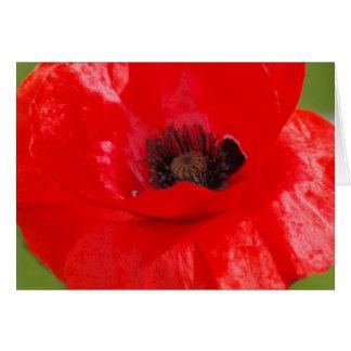 Scarlet Poppy Card