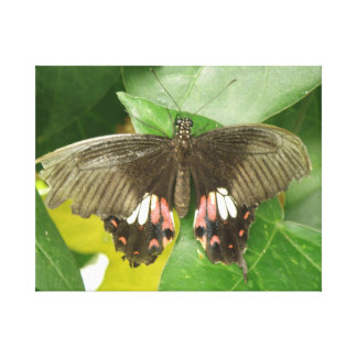 Scarlet Swallowtail Butterfly Canvas Print