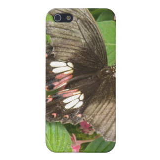 Scarlet Swallowtail Butterfly Macro i Case For iPhone SE/5/5s