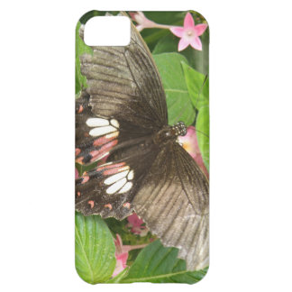 Scarlet Swallowtail Butterfly Macro iPhone Case