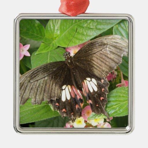Scarlet Swallowtail Butterfly Macro Ornament
