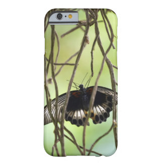 Scarlet Swallowtail butterfly (Papilio Barely There iPhone 6 Case