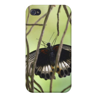 Scarlet Swallowtail butterfly (Papilio iPhone 4 Cover