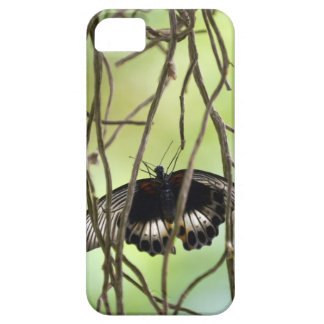 Scarlet Swallowtail butterfly (Papilio iPhone SE/5/5s Case