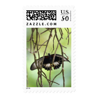 Scarlet Swallowtail butterfly (Papilio Postage