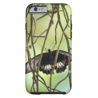 Scarlet Swallowtail butterfly (Papilio Tough iPhone 6 Case