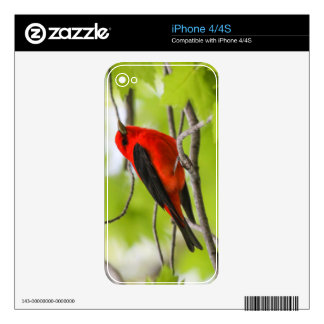 Scarlet Tanager Decal For iPhone 4