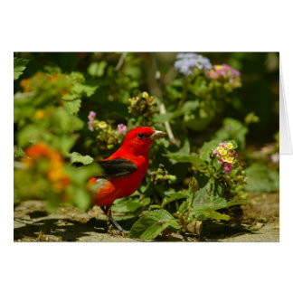 Scarlet Tanager Greeting Cards