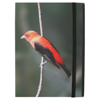 Scarlet Tanager iPad Case