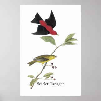 Scarlet Tanager - John James Audubon Poster