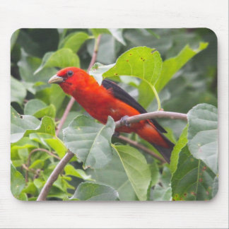 Scarlet Tanager Mouse Pad