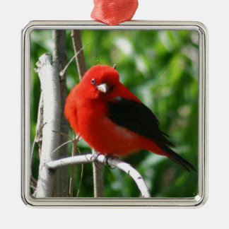 Scarlet Tanager Ornaments