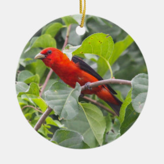 Scarlet Tanager Christmas Ornaments