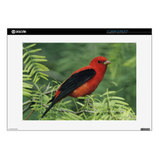 "Scarlet Tanager, Piranga olivacea,male on 15"" Laptop Decal"
