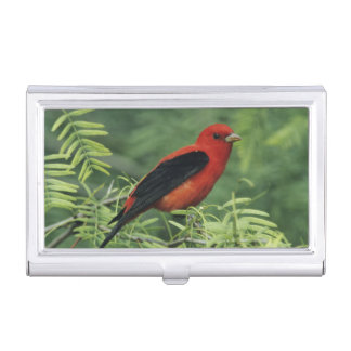 Scarlet Tanager, Piranga olivacea,male on Business Card Case