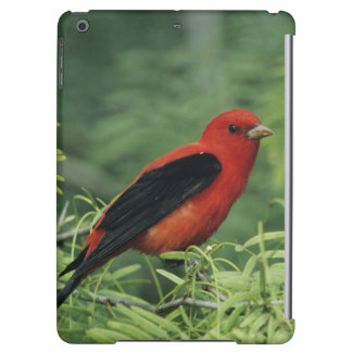 Scarlet Tanager, Piranga olivacea,male on iPad Air Cover