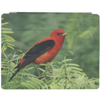 Scarlet Tanager, Piranga olivacea,male on iPad Smart Cover