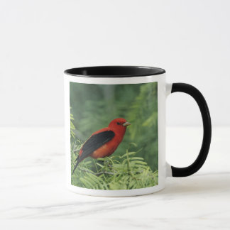 Scarlet Tanager, Piranga olivacea,male on Mug