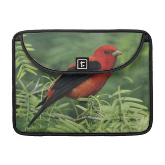 Scarlet Tanager, Piranga olivacea,male on Sleeve For MacBooks