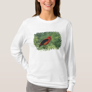 Scarlet Tanager, Piranga olivacea,male on T-Shirt