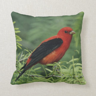 Scarlet Tanager, Piranga olivacea,male on Throw Pillow