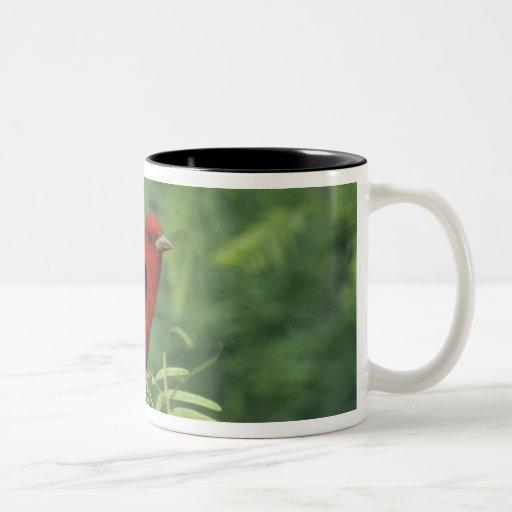 Scarlet Tanager, Piranga olivacea,male on Two-Tone Coffee Mug