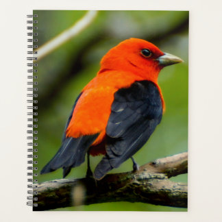 Scarlet Tanager Spiral Weekly/Monthly Planner
