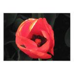 "Scarlet Tulip 5"" X 7"" Invitation Card"