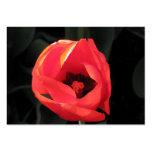 Scarlet Tulip Business Card Templates