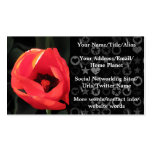 Scarlet Tulip Business Cards