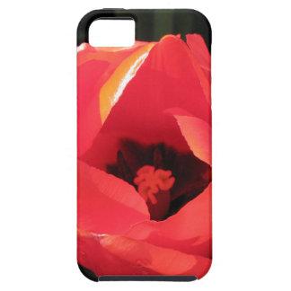 Scarlet Tulip iPhone 5 Cases