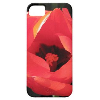Scarlet Tulip iPhone 5 Covers