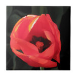 Scarlet Tulip Tile