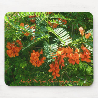 Scarlet Wisteria (Sesbania punicea) OBX NC Series Mouse Pad