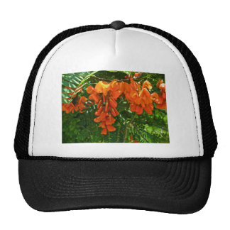 Scarlet Wisteria (Sesbania punicea) OBX NC Series Trucker Hat