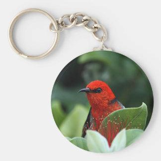 Scarlett Honeyeater bird Keychain