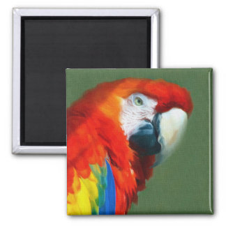 Scarlett Macaw Magnet