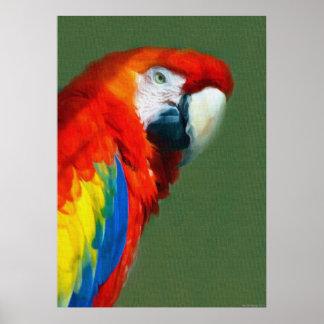Scarlett Macaw Posters