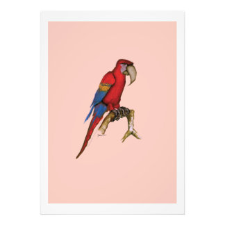 scarlett macaw, tony fernandes photo print