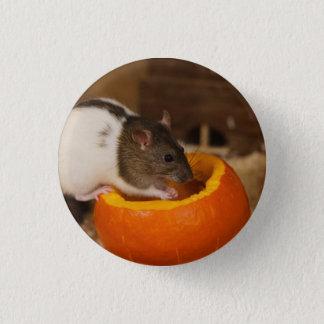 scary Black Hooded rat eating pumpkin seeds Pinback Button