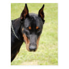 scary doberman postcard