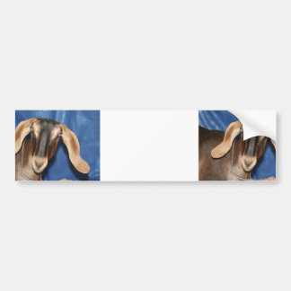 Scary eyed Nubian goat kid head picture Bumper Sticker