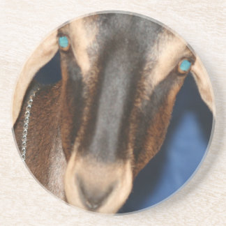 Scary eyed Nubian goat kid head picture Drink Coaster