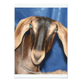 Scary eyed Nubian goat kid head picture Announcement