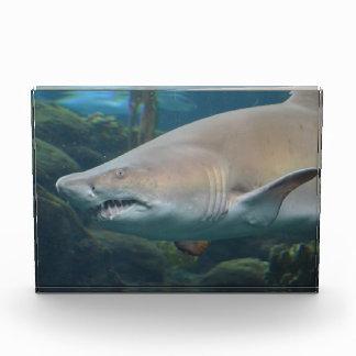 Scary Great White Shark Award
