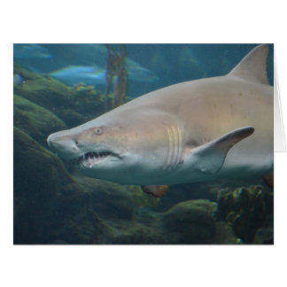 Scary Great White Shark Card